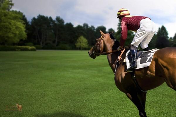 Yarış Atı Yetiştiriciliği