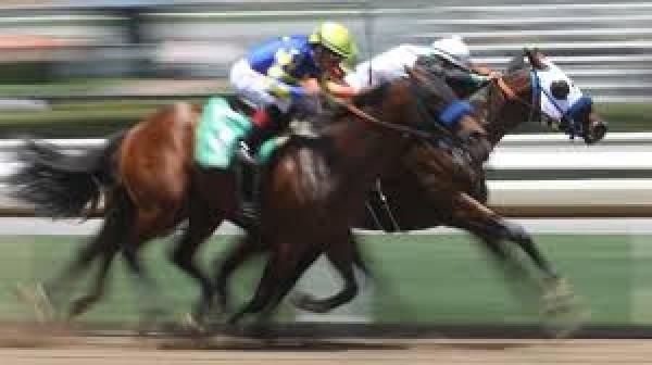 Tjk Sonuc Yabancı At Yarışı Leicester Birleşik Krallık 7 Eylül